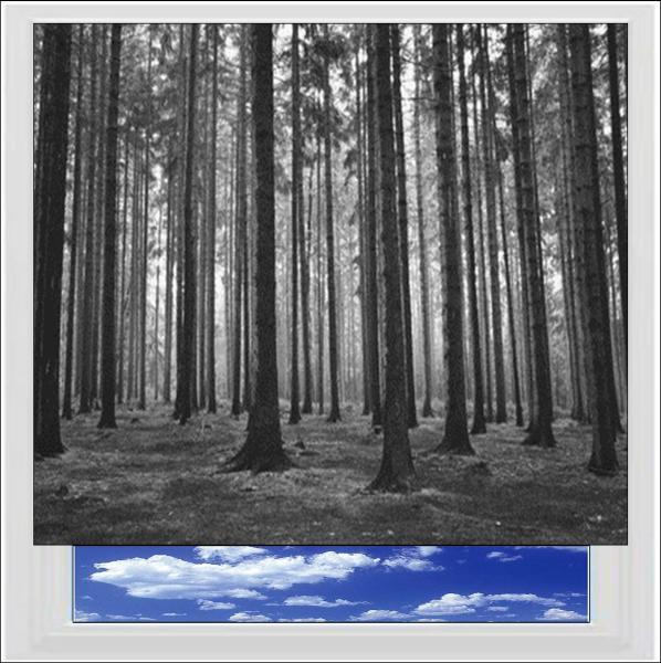 Black and White Forest Digitally Printed Photo Roller Blind