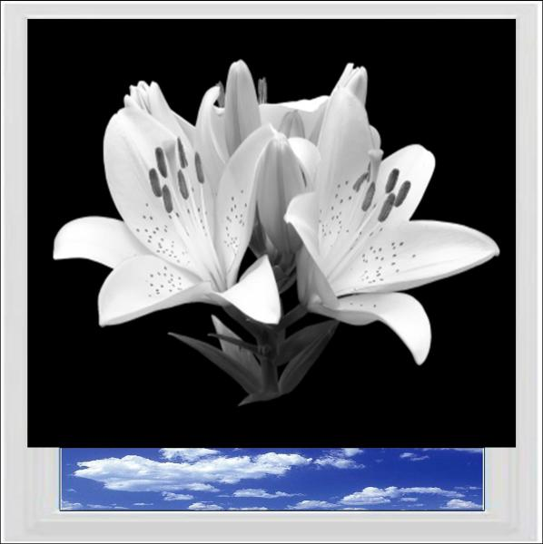 Black and White Lily Digitally Printed Photo Roller Blind