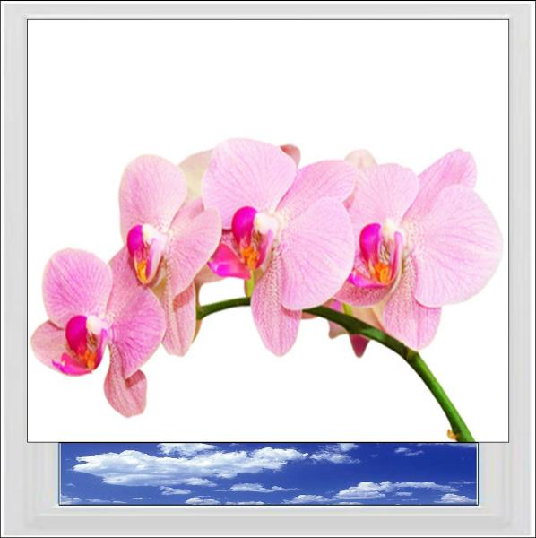 Pink Orchid Digitally Printed Photo Roller Blind