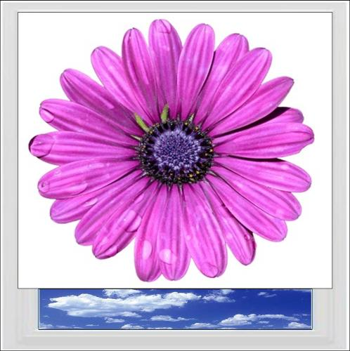 Purple Flower Digitally Printed Photo Roller Blind