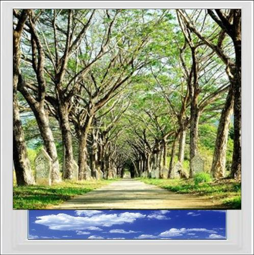 Tree Lined Path Digitally Printed Photo Roller Blind