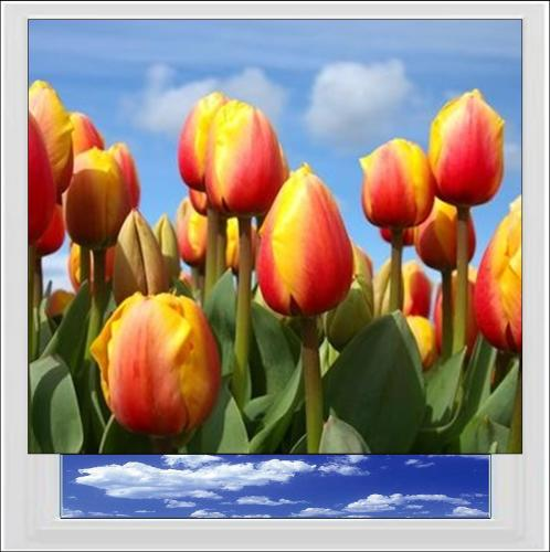 Tulips Digitally Printed Photo Roller Blind
