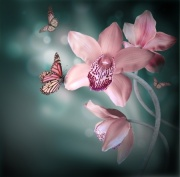 Butterflies and Pink Orchids Digitally Printed Photo Roller Blind